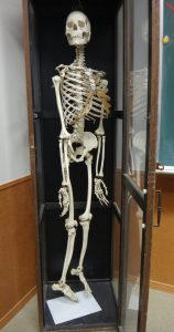 卒前研修 人の骨 本物?
